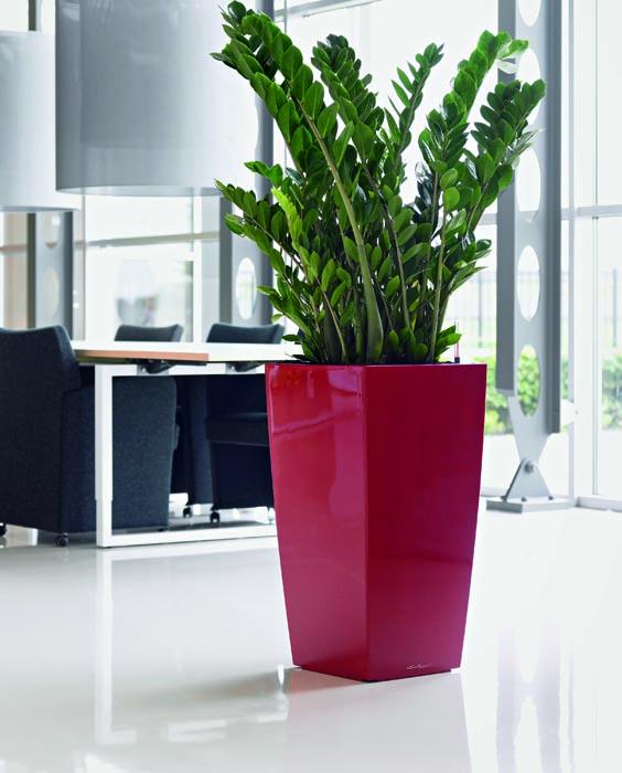 Vaso Cubico di Lechuza vasi e fioriere parma